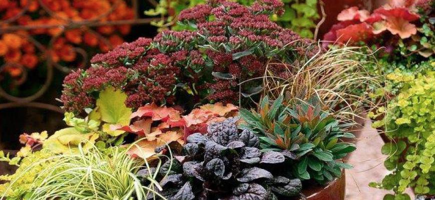 Farbenpracht für die dritte Saison - Herbstzauber