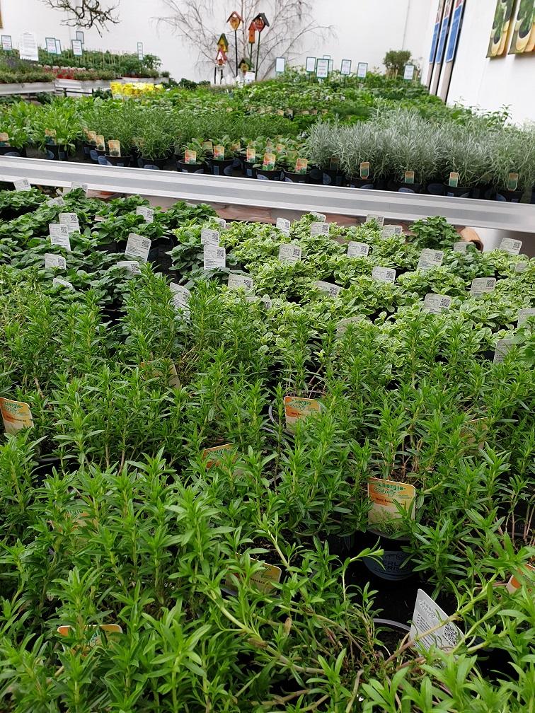 Vorfreude auf den Sommer! - Kräuter, Gemüsejungpflanzen und Topfgemüse