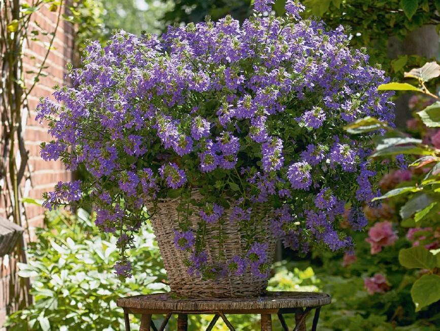 Vorfreude auf den Sommer! - Pflanze des Jahres im Norden